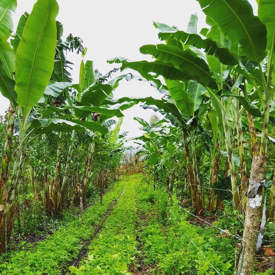Foto 2 - ProNobis Agroflorestal