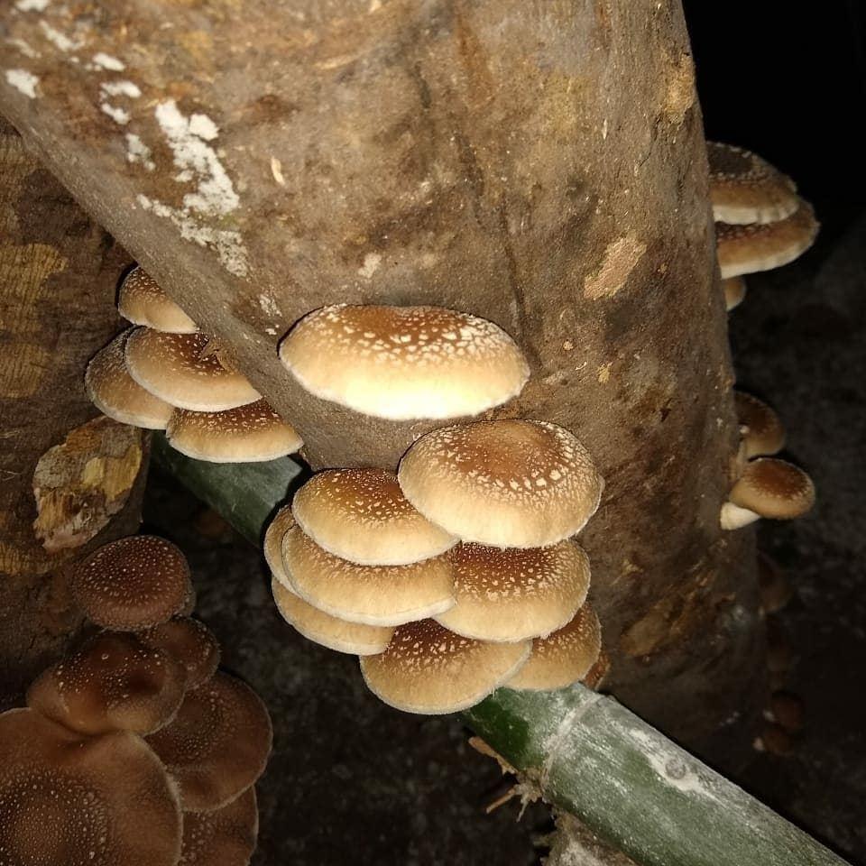 Foto 3 - ProNobis Agroflorestal