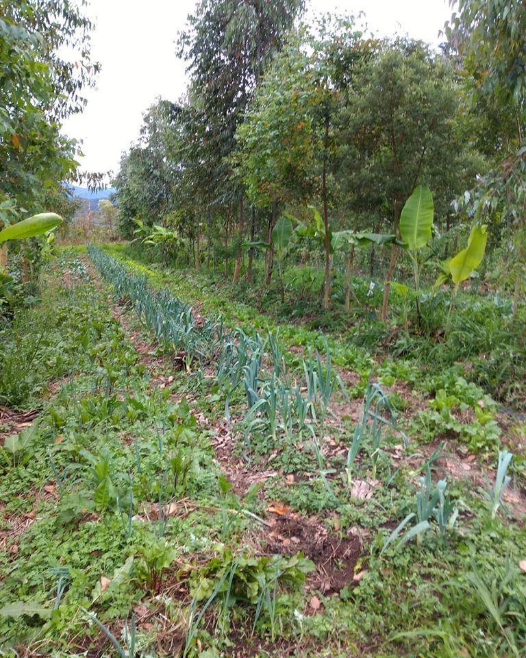 Foto 4 - ProNobis Agroflorestal